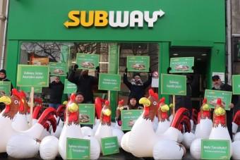 Hühner-Protest gegen Subway erreicht Köln