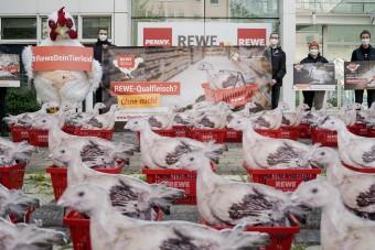 62 Hühner vor Rewe-Sitz in Teltow
