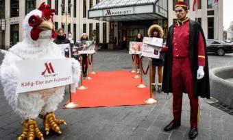 Marriott-Hotels: Käfigeier zum Frühstück?