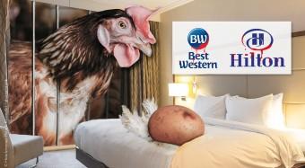 Kampagnenstart gegen Hilton und Best Western