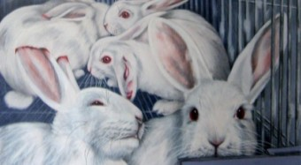Das Bilderbuch der Haustiere – Kaninchen