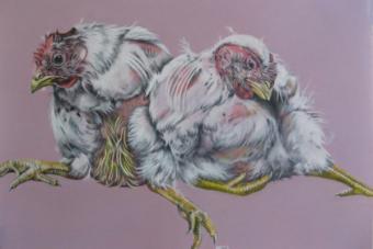 Das Bilderbuch der Haustiere – Hühner