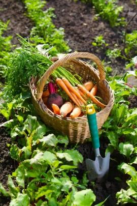 Bio-veganer Landbau