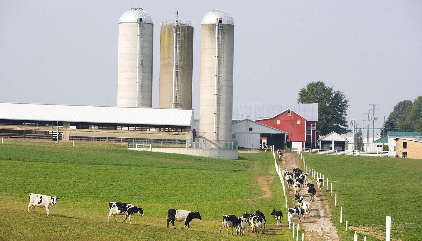 Milchfarm