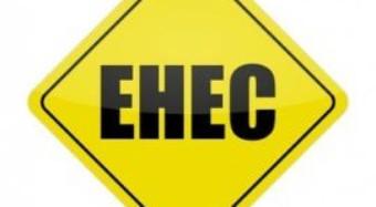 EHEC aus der Massentierhaltung