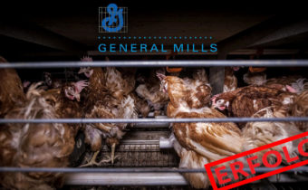 Kampagnenerfolg: General Mills ohne Käfigeier