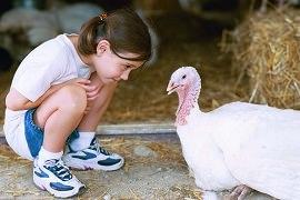 Tierleben - Mädchen und Pute werden Freunde