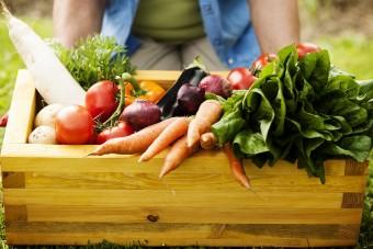 Biozyklisch-vegane Betriebe: Besser für alle
