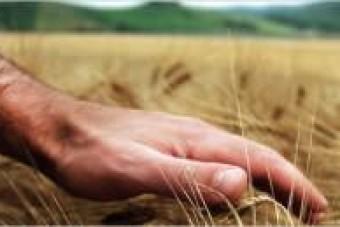 EU-Agrarreform: Forderungen von 1.000 Professoren und 74 % der Bundesbürger