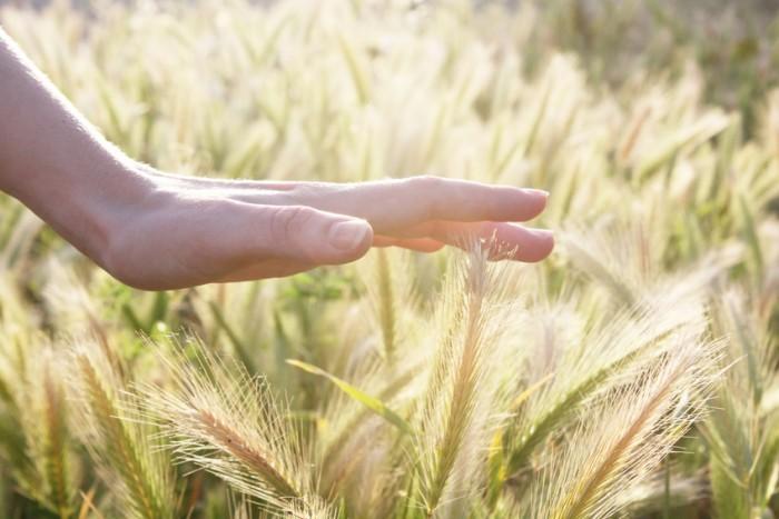 Landwirtschaft - schützende Hand