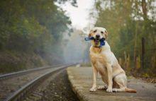 Was tun bei Tiernotfällen? – Teil 1: »Heimtiere«