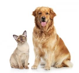 Cats N Dogs Pet Shop