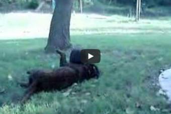 Hund und Schwein 2