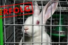 Ende der Kaninchenkäfige in Sicht