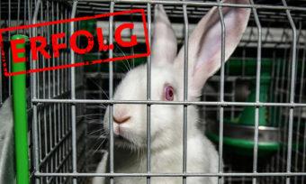 Das Ende der Kaninchenkäfige ist in Sicht