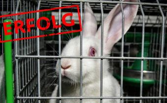 EU-Parlament stimmt für ein Verbot von Kaninchenkäfigen