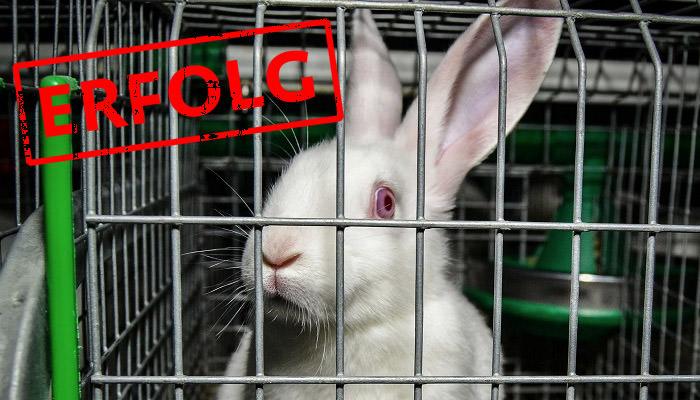 Ein Kaninchen in Käfighaltung: Abstimmung im EU-Parlament war erfolgreich.