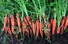 Bio-veganer Landbau ist eine reale Alternative