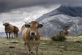 100.000er Hähnchenmastanlage und 3.200er Milchfabrik verhindert