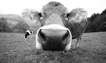 Leder: Tierleid und Umweltverschmutzung