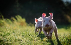Nie wieder »Nutztier«: Lebens- statt Bauernhof