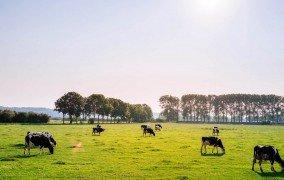 Zukunftskommission: Tierschutz beteiligen