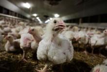 Streit um die Vogelgrippe