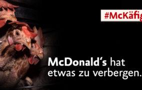 Hühner in Käfighaltung und McDonald's hat etwas zu verbergen, #McKäfig