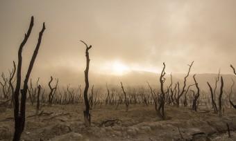 Tierprodukte befeuern Erderhitzung