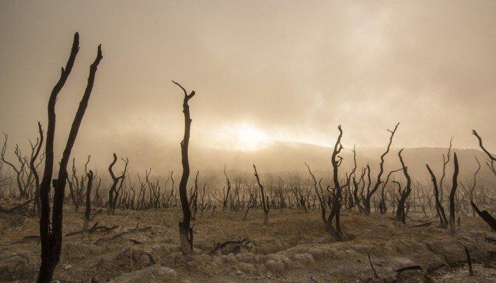 Eine verdorrte Landschaft.