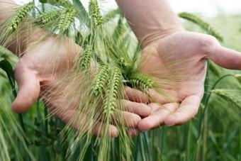 WRI: Bericht zur Zukunftsernährung