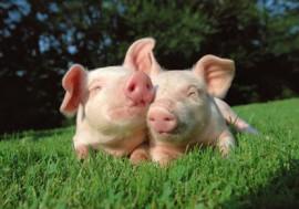 Tierschutz-Fortschritte 2012