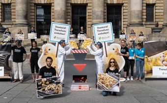 Urteil zum Kükentöten: Erfolg für den Tierschutz