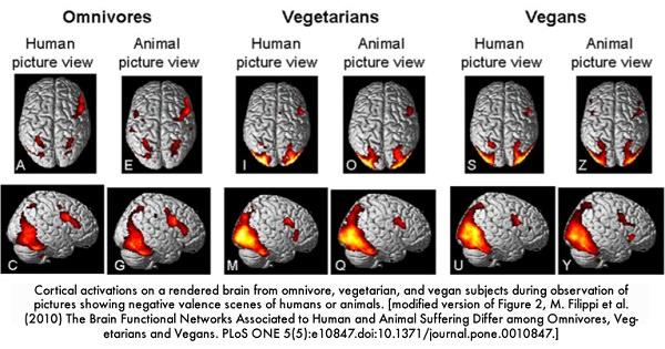 Gehirne von Vegetariern im Scan - Empathie und Mitgefühl
